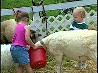 Brainy Baby - Animals.avi