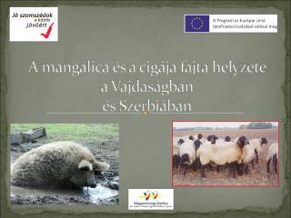 A mangalica és a cigája fajta helyzete-tanyanap Óbecse.ppt
